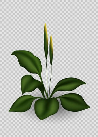 Realistic green grass. 3D fresh spring plant. Vector illustration EPS10