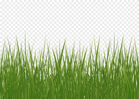 Seamless horizontal green lawn of grass pattern and isolated magnified circle of grass patch. Spring green grass, seamless pattern. 3d realistic vector set Ilustração