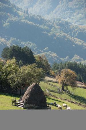 ranch background: Sheep around haystack in mountin village Stock Photo