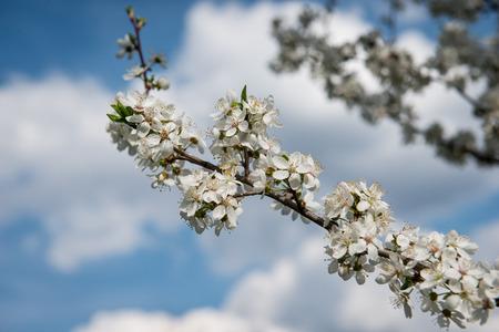Blossom fruit