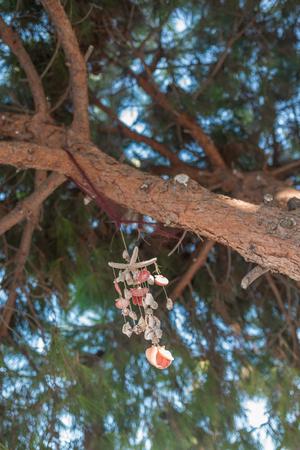 Sea shell wind chimes on tree 版權商用圖片