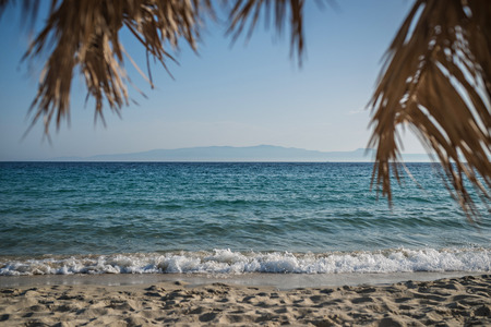 Beach holiday background, calm sea palm tree 版權商用圖片