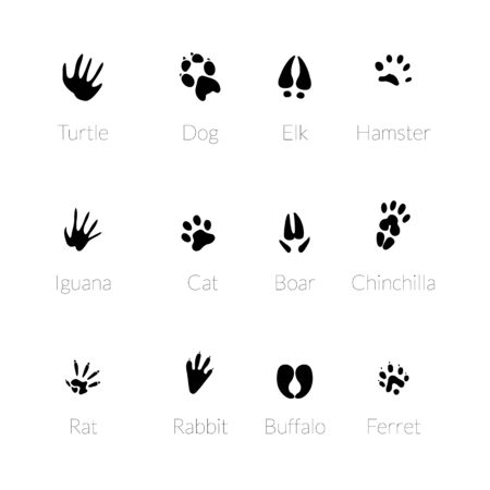 Footprints of animals. Traces of a swan, a llama and a donkey, a cat. Owl, dog and mouse, dove and zebra paw prints isolated vector set