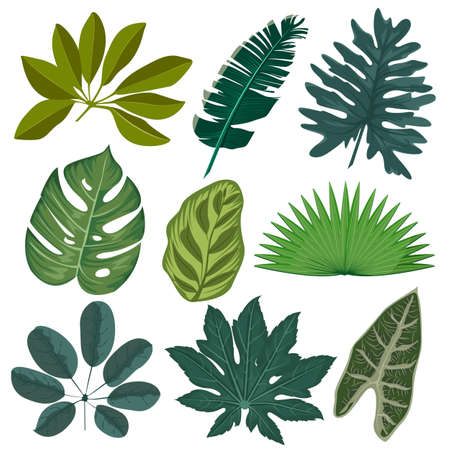 Set realistic tropical leaves and plants. Tropical palm leaves, jungle leaves and exotic botanical design. Vector illustration
