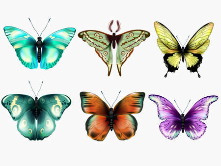 Vector set of beautiful colorful butterflies on a white backgroundButterfly collection.Vector illustration Illustration
