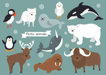Arctic animals set. Arctic fox, polar bear, penguin, puffin, snowy owl, seal, narwhal, reindeer, walrus, musk-ox. Flat design arctic animals with snow. Vector illustration