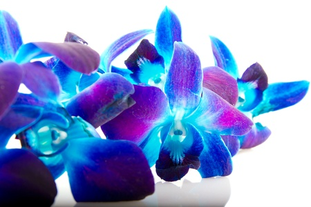dendrobium: Dendrobium orchid with reflection on light background Stock Photo