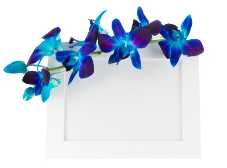 dendrobium: Dendrobium orchid with photo Frame on light background