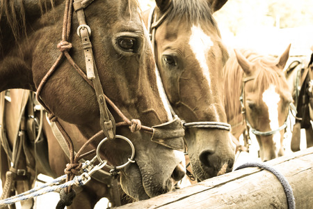 hitching post: horses at the hitching post