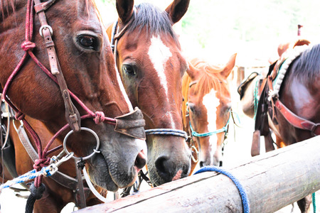 horses at the hitching post
