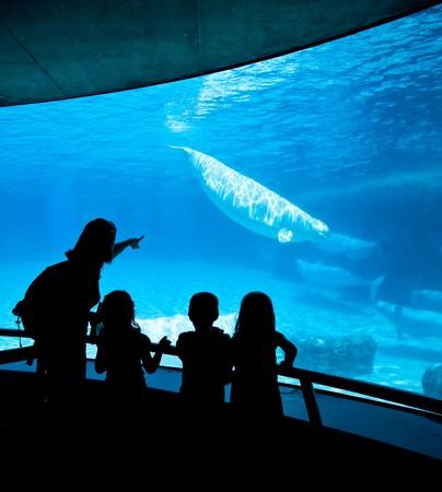 vriendelijke beluga walvissen in onderwater weer geven Stockfoto