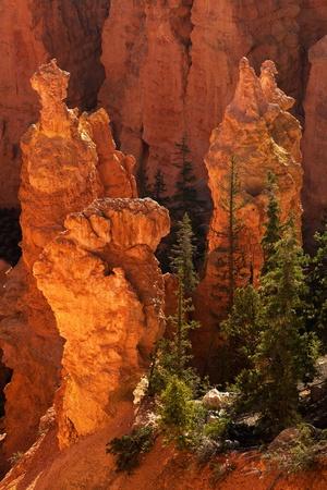 hoodoos: Bryce Canyon National Park Sunrise On Hoodoos