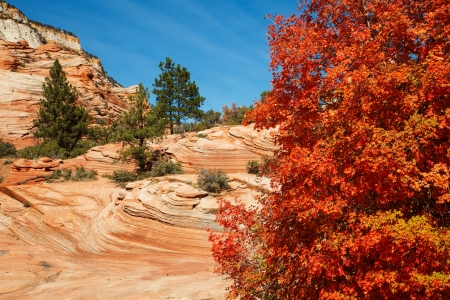 zion: Red Maple Autumn Colors In Utahs Zion National Park