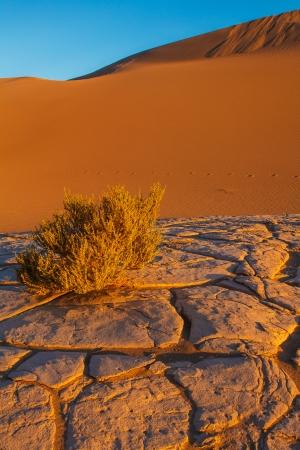 Mesquite Sand Dunes Death Valley National Park California