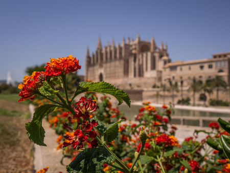 Red flowers with bokeh background of Palma de Mallorcas Cathedral Stock Photo