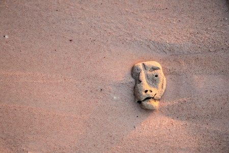 Coral on sand with a strange shape of head 스톡 콘텐츠