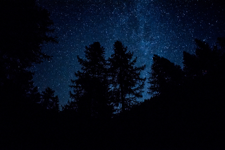 starry night in the sky with trees silhouettes