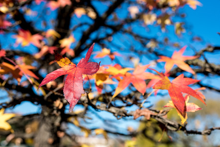 autumn foliage, colours of the nature in fall, details and background Stock Photo