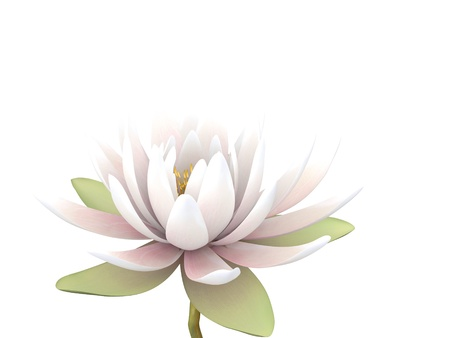 3d lotus on the white background