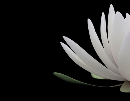 3d lotus on the black background photo
