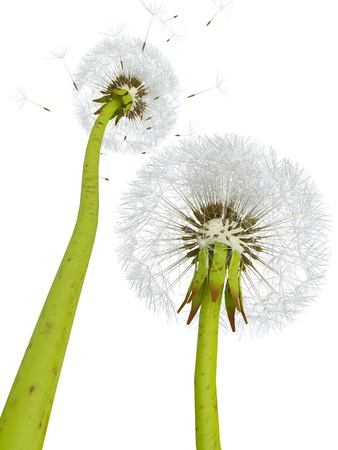 3d dandelions Stock Photo
