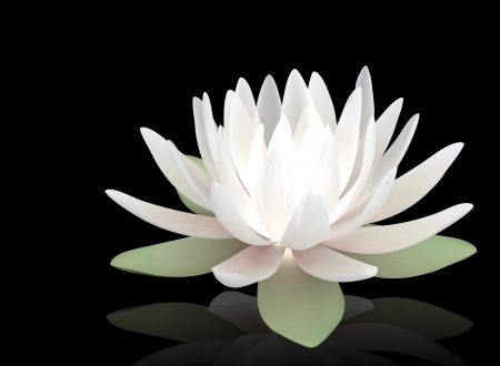 3d luminous lotus