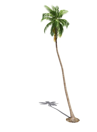 3d isolated palm tree