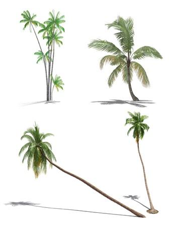 set of 3d palms Stock Photo