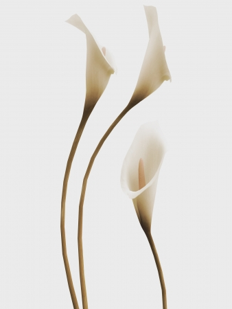 3d callas arrangement in vintage stile photo