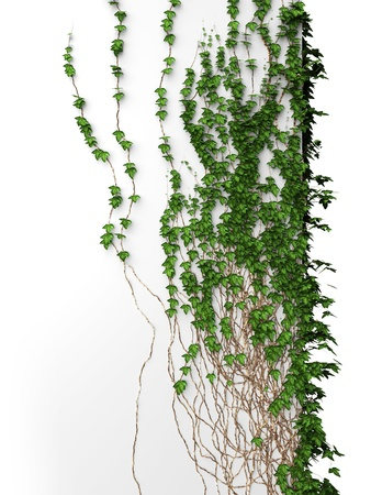3d blank white ivy vintage wall