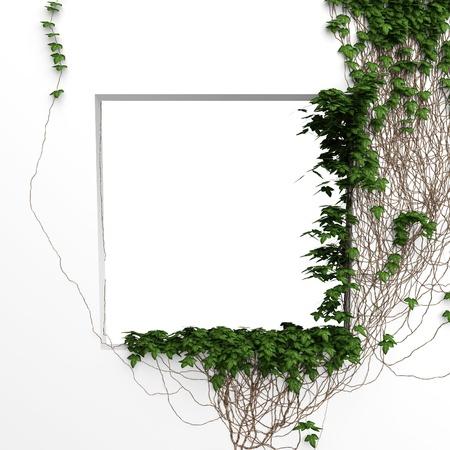 3d ivy window white frame background