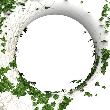 3d round ivy wall  frame background photo