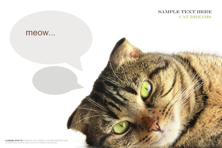 Tabby cat is lying and dreaming on a white background Stock Photo - 17855744