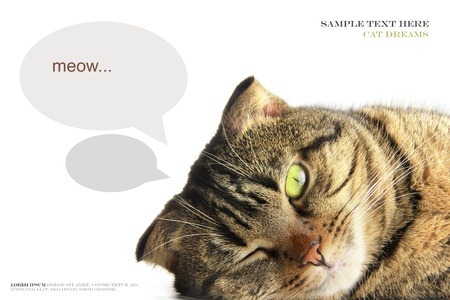 Tabby cat is lying and dreaming on a white background Stock Photo - 18152606