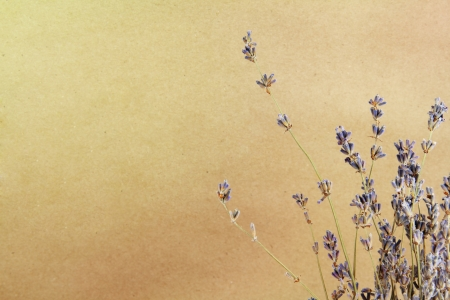 Art lavander background on a brown paper Stock Photo - 18152564