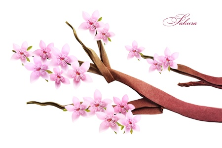 Sakura spring blossom of paper on a white background Stock Photo - 18419690