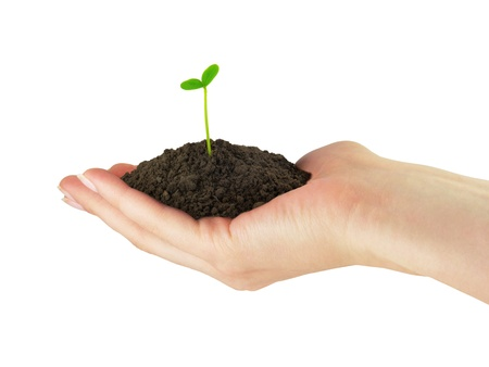 cupped hands: Green seedling plant whith soil in the hand