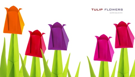 Origami  tulip flowers on a white background Stock Photo - 18660985