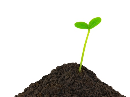 Green plant young seedling in the soil on a white background Stock Photo - 18776298