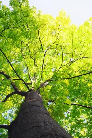 Green summer tree on blue sky Stock Photo - 20011192