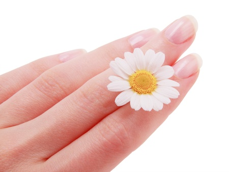 Chamomile in women hand care isolated on a white background Stock Photo - 20276619