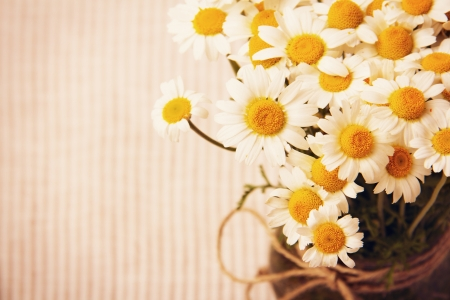 Chamomile wild flowers bouquet in vintage stile Stock Photo - 20276621