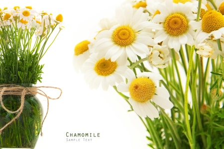Chamomile flower bouquet herbal on a white background Stock Photo - 20269993