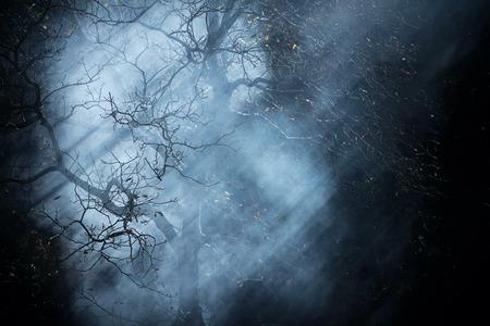 Autumn nigth dark fantasy black fog forest tree background Standard-Bild