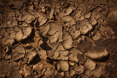 humus: Cracked dry humus textured bround ground background