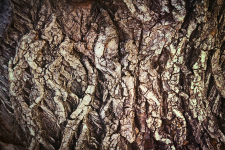 hazel: Tree wood plant textured old hazel bark trunk background