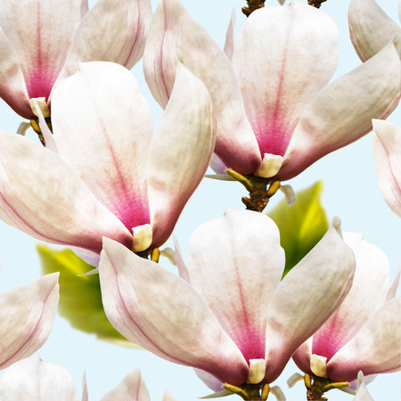fragility: Pink magnolia spring fragility flowers on sky blue background seamless pattern