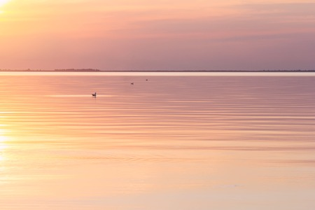 pink sunset: Lake tranquil pink sunset landscape above water waves
