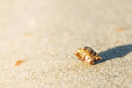 Shell on sand beach sunny blank background