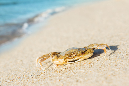 Crab walking on sand sea beach and wave background